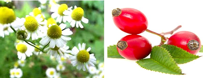rosa-e-camomila-flores