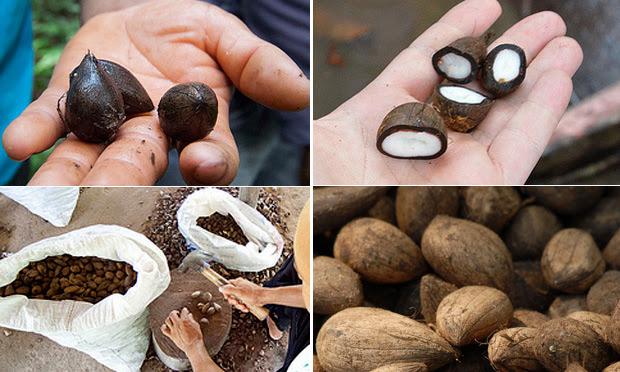 semente de murumuru